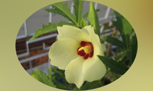 Medicinal Plants Guide Pro