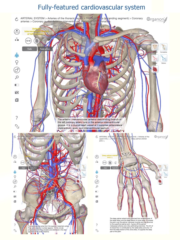 3d Organon Anatomy Heart Arteries And Veins App Price Drops