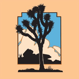 Joshua Tree National Park Essentials