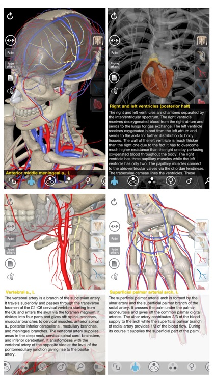 3D Organon Anatomy - Heart, Arteries, and Veins screenshot-0