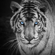 tiger browser - fast internet web browser for iPhone & iPad