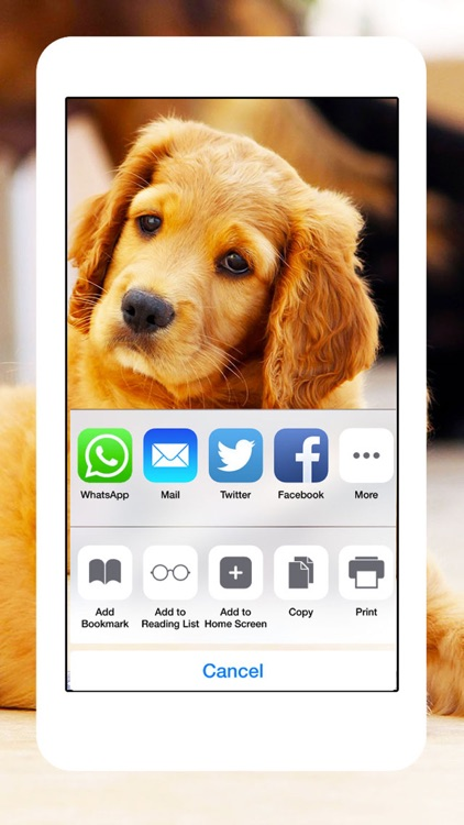 Dogs and Puppies - Dog Wallpapers, Cute Animal Backgrounds screenshot-4