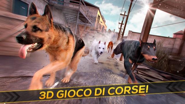 Il mio cane da corsa giochi gratis di cani e animali for Giochi di cavalli da corsa
