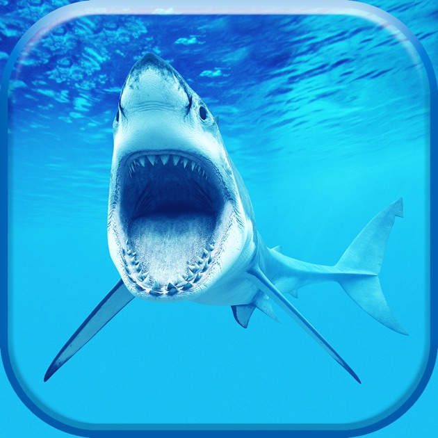 Shark Wallpaper Lock Screen Themes Pimp Your Background With