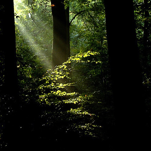 Forest Light Wallpapers HD: Quotes Backgrounds with Art Pictures icon