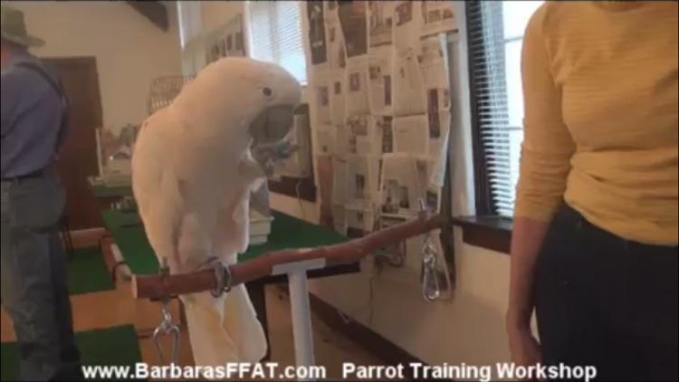 Training A Parrot screenshot-4