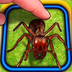 Activities of Ant Hitter Free