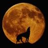 シンプル人狼