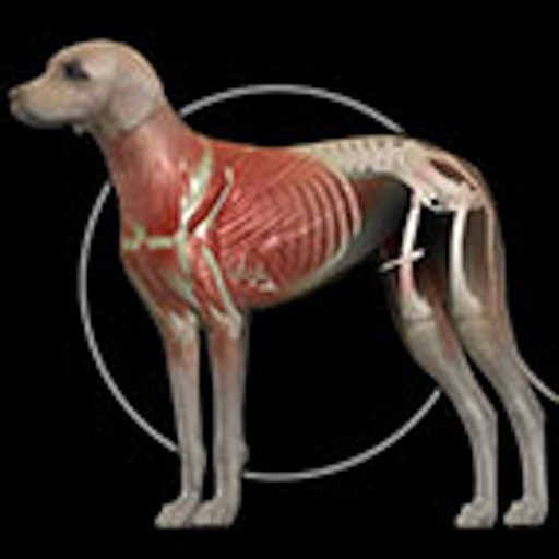 Dog Anatomy: Canine 3D