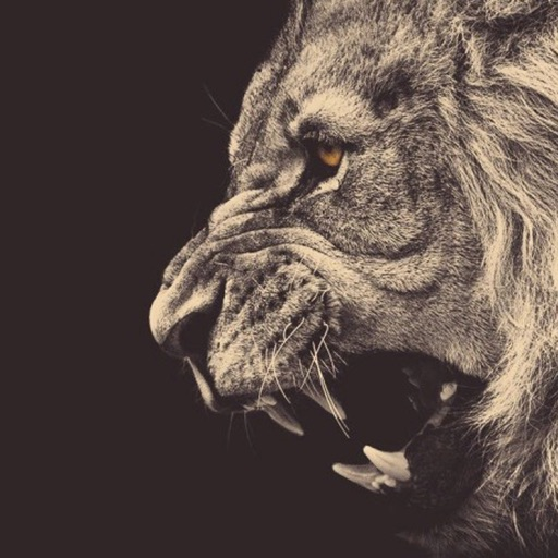 Best HD Lion Art Wallpapers for iOS 8 Backgrounds: Wild Animal Theme Pictures Collection