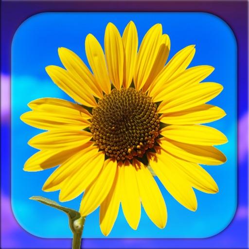 PHOTO5 - Professional Photo Editor for iPad