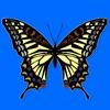 蝶が飛ぶ。
