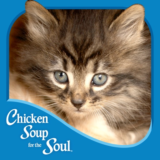 The Cat's Meow from Chicken Soup for the Soul ® icon