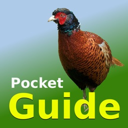 Pocket Guide UK Game