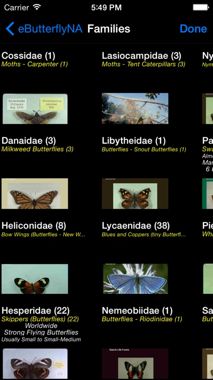 Butterflies & Moths of North America