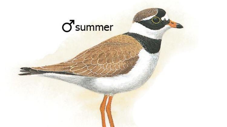 Benelux Bird Identification screenshot-3
