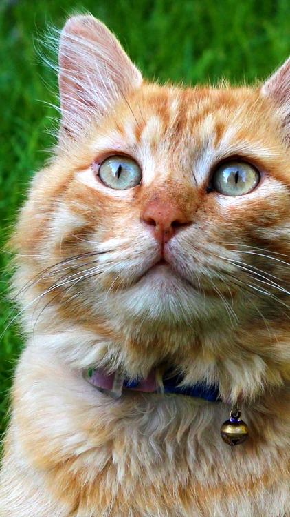 Cat Wallpapers: Retina Display HD Backgrounds screenshot-3