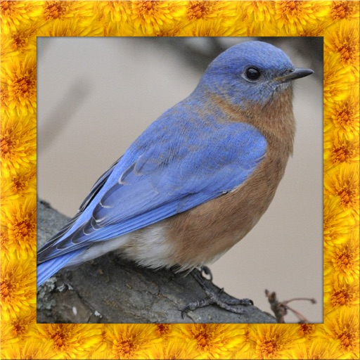 Blue Bird Simulator 3D