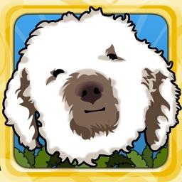 Happy Dog Jump - Golden Doodle