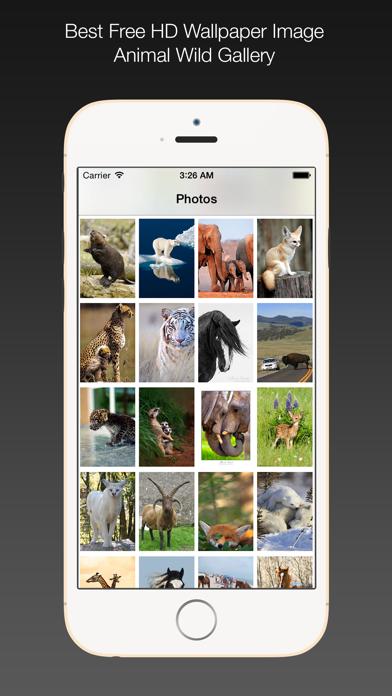 Animal Wild Wallpaper HD