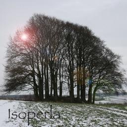 Winter TreeId - British Isles Tree Guide