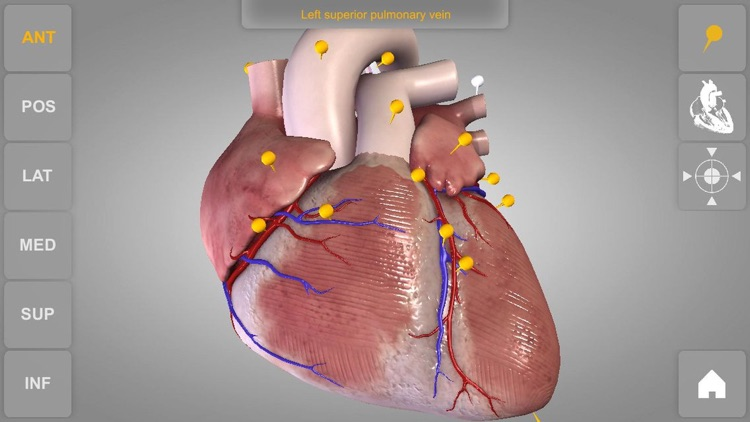 Heart - 3D Atlas of Anatomy screenshot-4