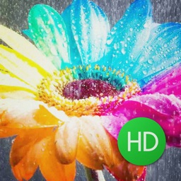 Customizable Flower Wallpapers HD Free !