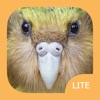 Birds of New Zealand LITE - iPhoneアプリ