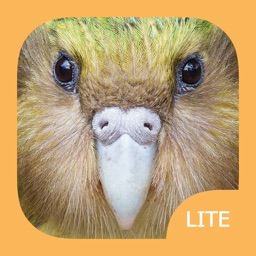 Birds of New Zealand LITE