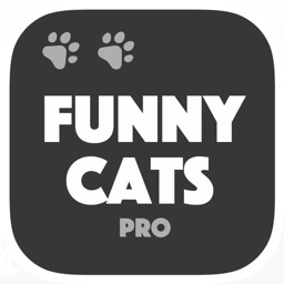 Cats are Funny - Vine & dubsmash gallery Pro