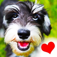 Codes for Dogs - Everything for Dog Lovers! Hack