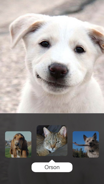 Clean My Screen — FREE Screen Cleaner with cute animals licking your face, one lick at a time screenshot-1