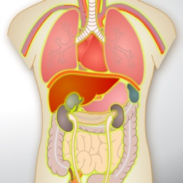 Human Anatomy Game