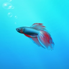 Activities of Aquarium Builder: My Pet Fish Tank Maker