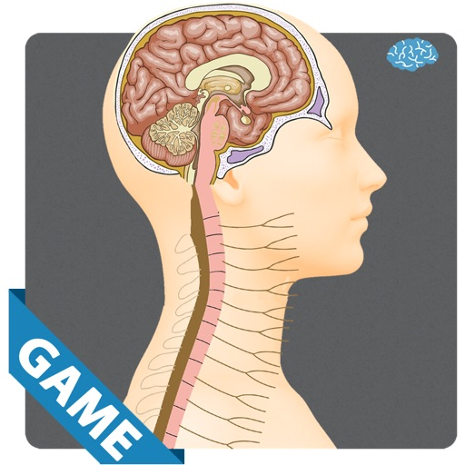 Nervous Anatomy Game