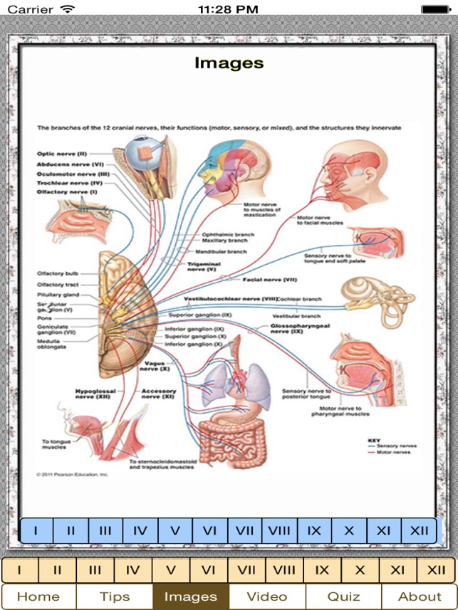Cranial Nerves Plus on the App Store