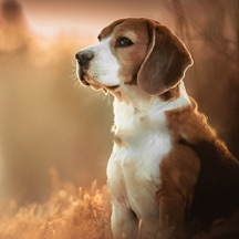 Dog Wallpapers & Backgrounds HD - Home Screen Maker with Cute Themes of Dog Breeds