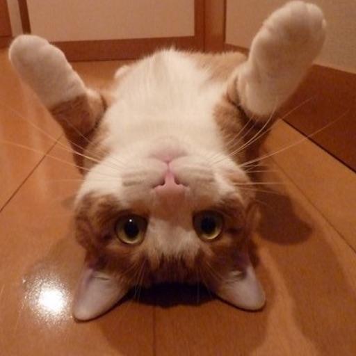 仰ぐ猫 icon