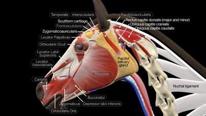 Screenshot for Horse Anatomy: Equine 3D in Chile App Store
