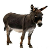 Donkey Sound Effects - Lovable Sounds, Ringtones and More from this Furry Animal