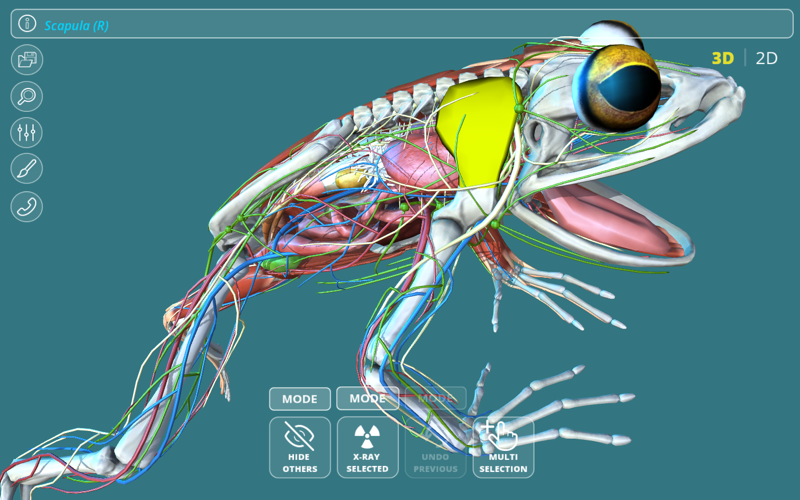 800x500bb 2018年2月21日Macアプリセール 3D人体解剖図グラフィック・モデルアプリ「3D Organon Anatomy」が値下げ!