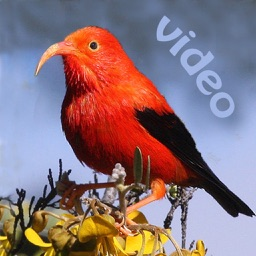 Bird ID Hawaii for iPad