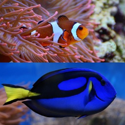 Who Is This ? for Nemo & Dory