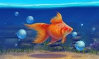 Aquarium 3D - Relaxation