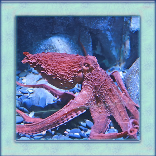 Octopus Simulator 3D