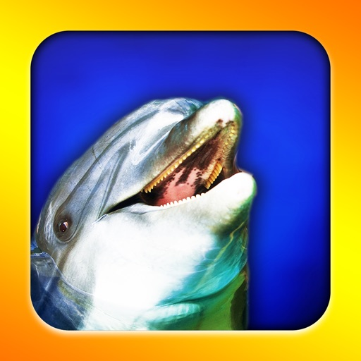 Flipper Dolphin (Your own playful dolphin!)