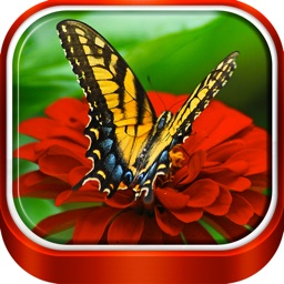 Butterfly Wallpaper HD – Vibrant Lock Screen + Beautiful Abstract Background.s