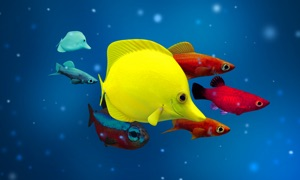 Aquarium Goldfish 3D