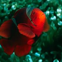 Codes for CHI Encyclopedia of Fish Hack
