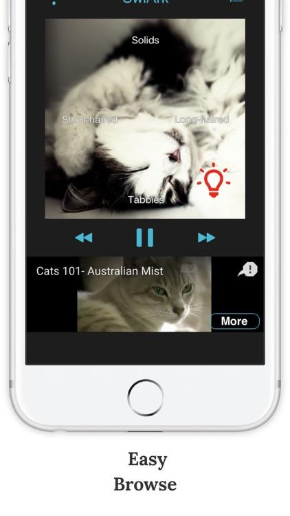 SwiArk - Cat Breed Video Directory